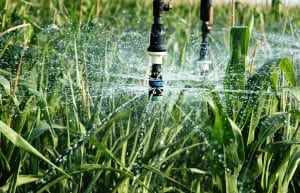 Sprinkler irrigation agriculture