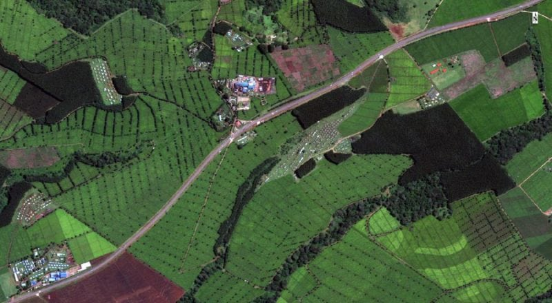Kenyan coffee plantation. Photo: Earth-i.