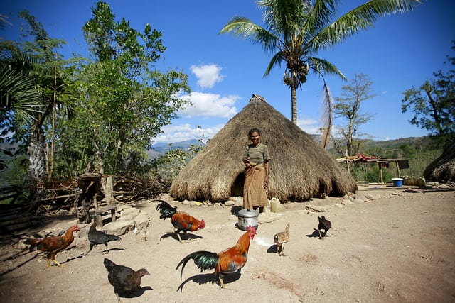 Batista Dos Santos stands in front of her traditional home, surrounded by roosters, in Bertakefe, Timor-Leste. Photo: UN/Martine Perret.