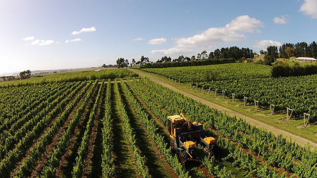 Tasmania's Riversdale Estate, a small family-owned vineyard. Photo: Flickr/Riversdale Estate.