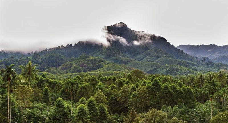 Nestle taps Airbus Satellite Monitoring for Deforestation