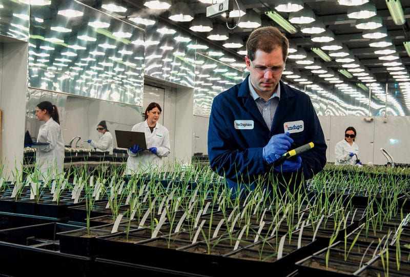 At Indigo Ag's Charlestown headquarters, technicians track plant growth. Photo: Jim Harrison/Harvard Magazine